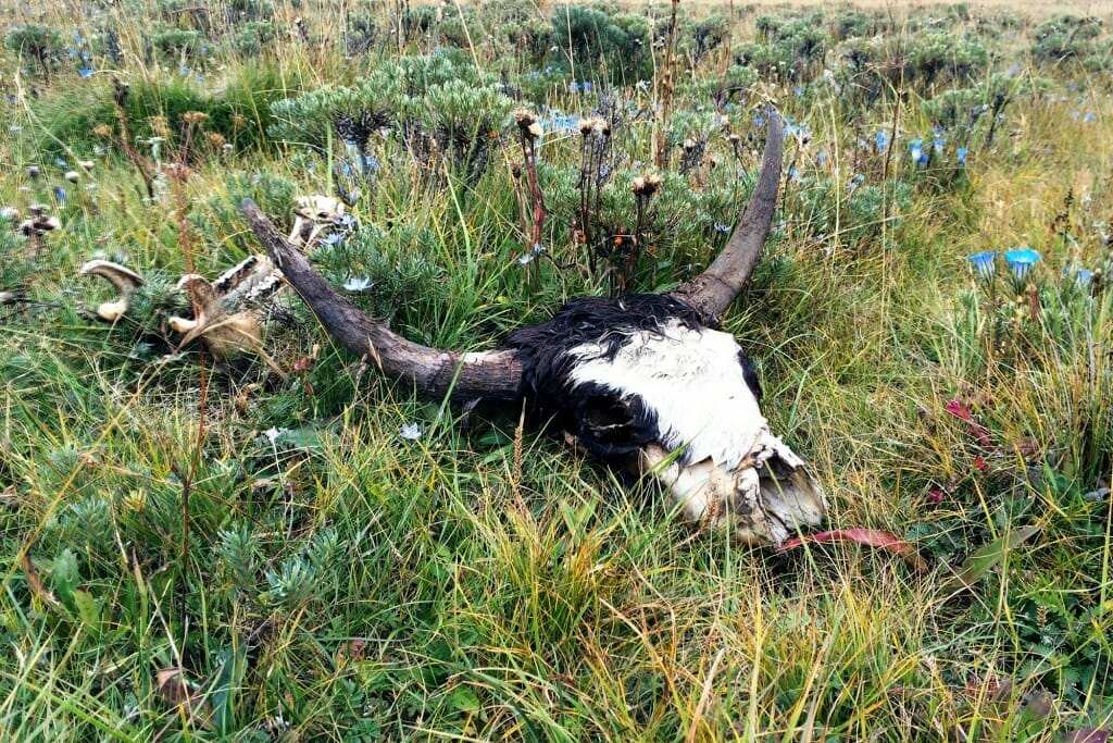 10 Reasons Why You Should Visit Tibetan Plateau - life and death on the Tibetan Plateau