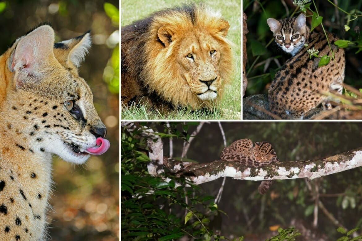 Animals of the Far East: rare individuals
