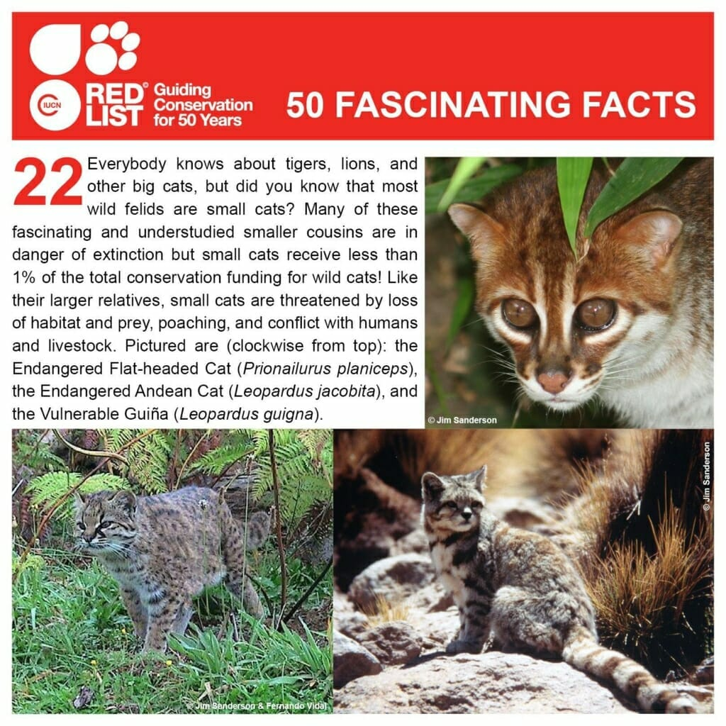 Wild Cat Species of the World and Where to Find Them