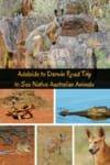 Adelaide to Darwin road trip to see native Australian animals