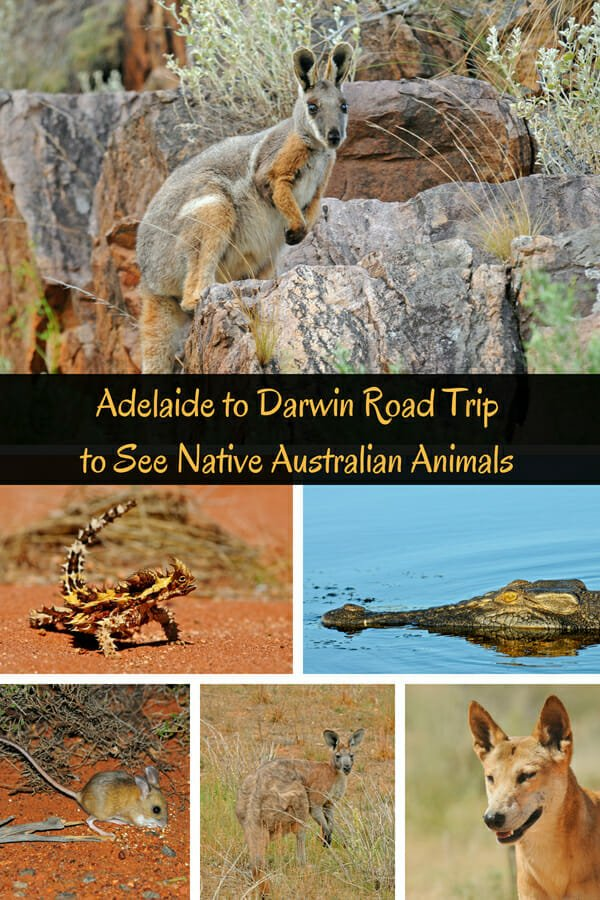 Adelaide to Darwin road trip to see native Australian animals