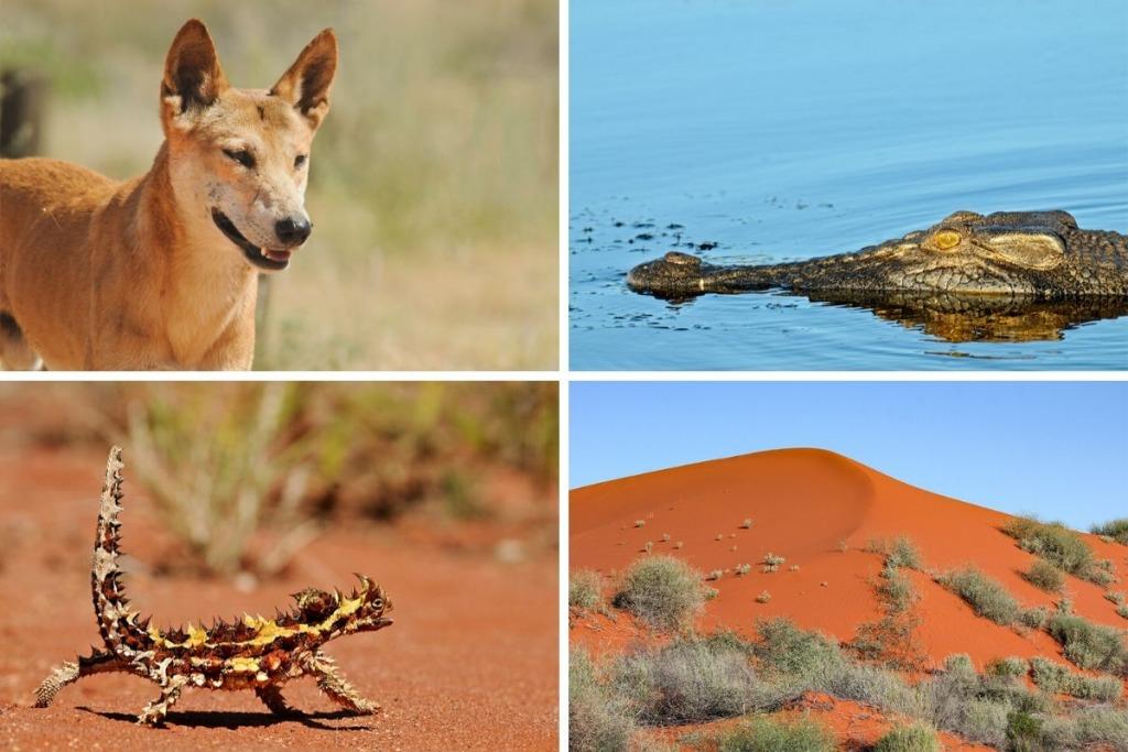 Australian Safari – Adelaide to Darwin self-drive itinerary