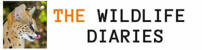 The Wildlife Diaries - A Wildlife Travel Blog
