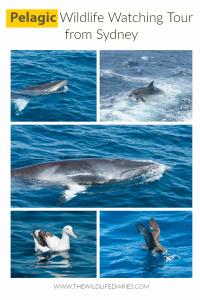 Pelagic Wildlife Watching Tour from Sydney