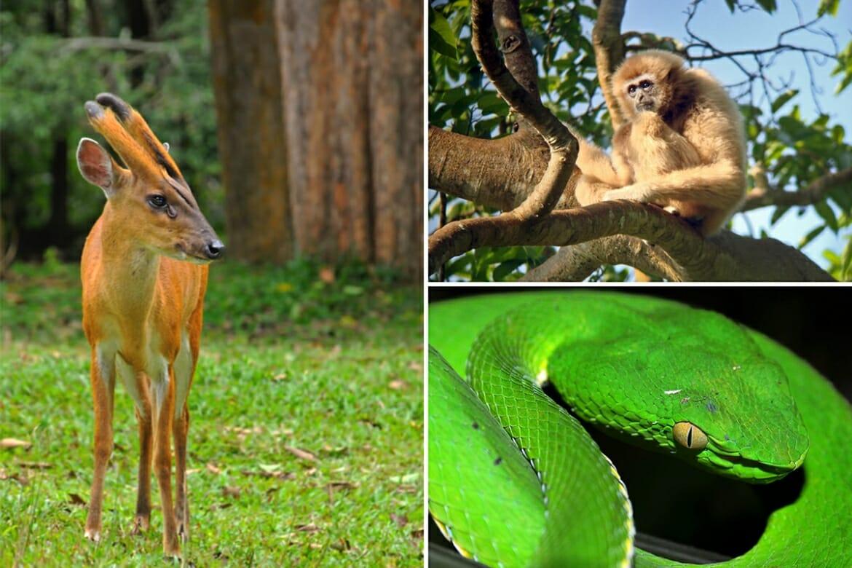 guide to Khao Yai National Park