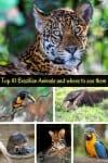 Top 10 Brazilian Animals