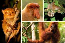 Borneo animals and where to see Borneo wildlife