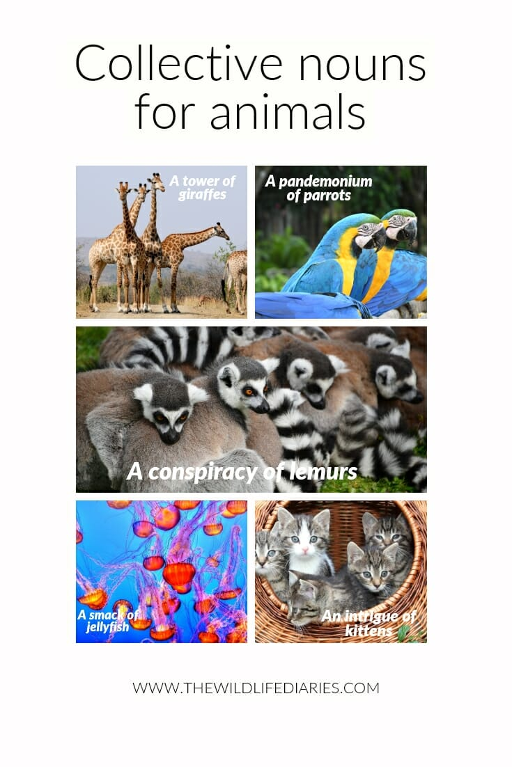 Learn a few collective nouns for animals and impress your friends on your next safari