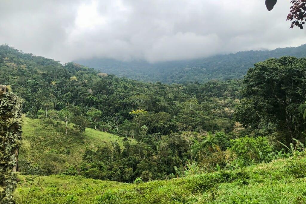 Road through the mountains Paraty