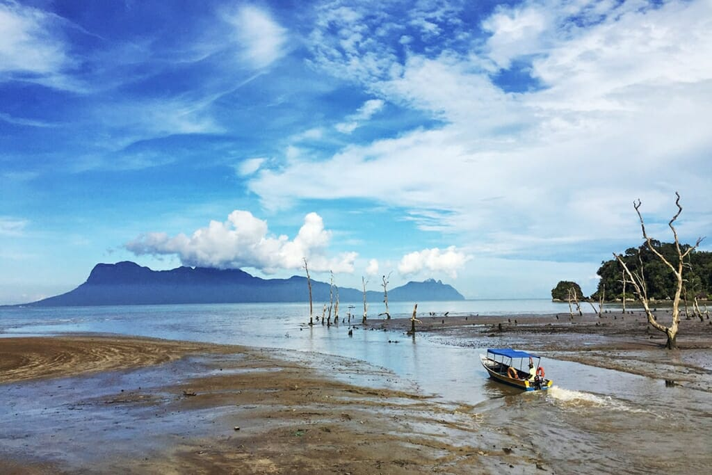 Where to see Borneo wildlife - Bako National Park