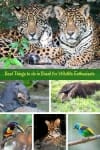 Best things to do in Brazil for wildlife enthusiasts