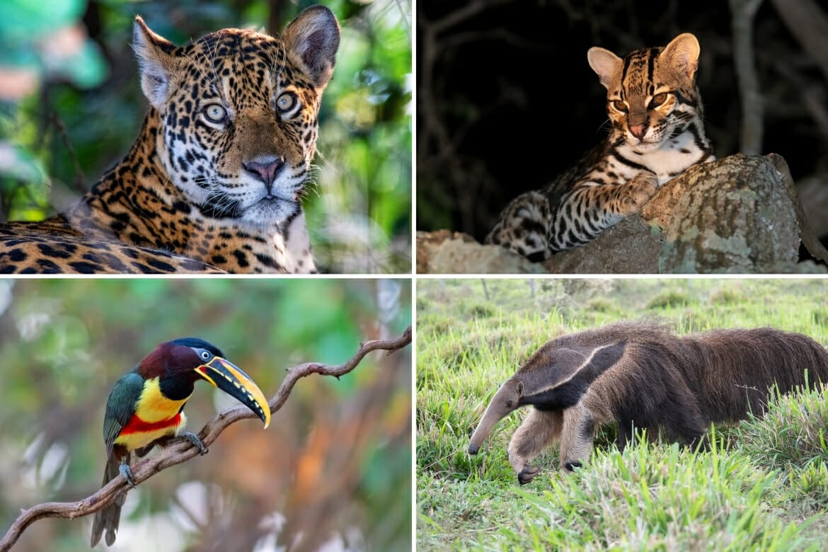 Things to do in Brazil for wildlife enthusiasts