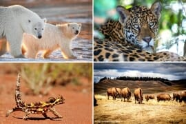 Best Safari Holidays Destinations Around the World