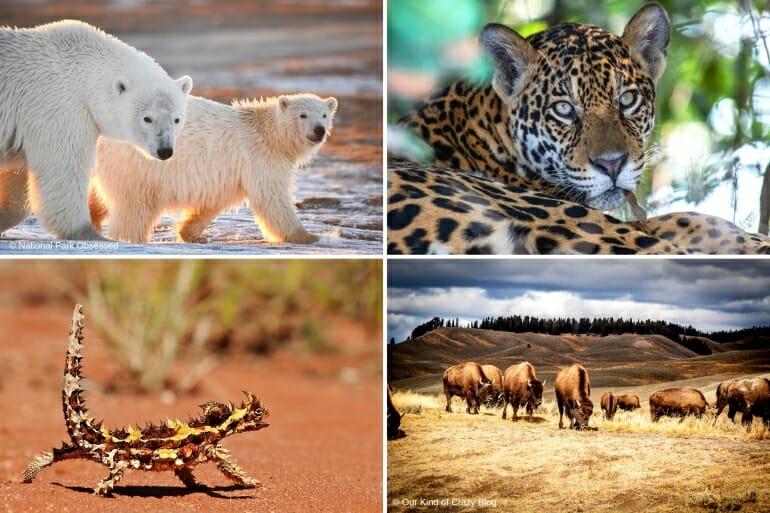 Best Safari Holidays Destinations Around the World