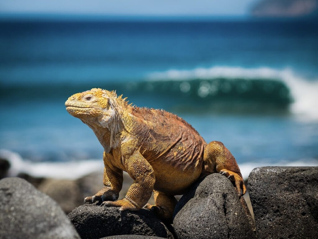Best safari holidays destinations in the world - Galapagos islands