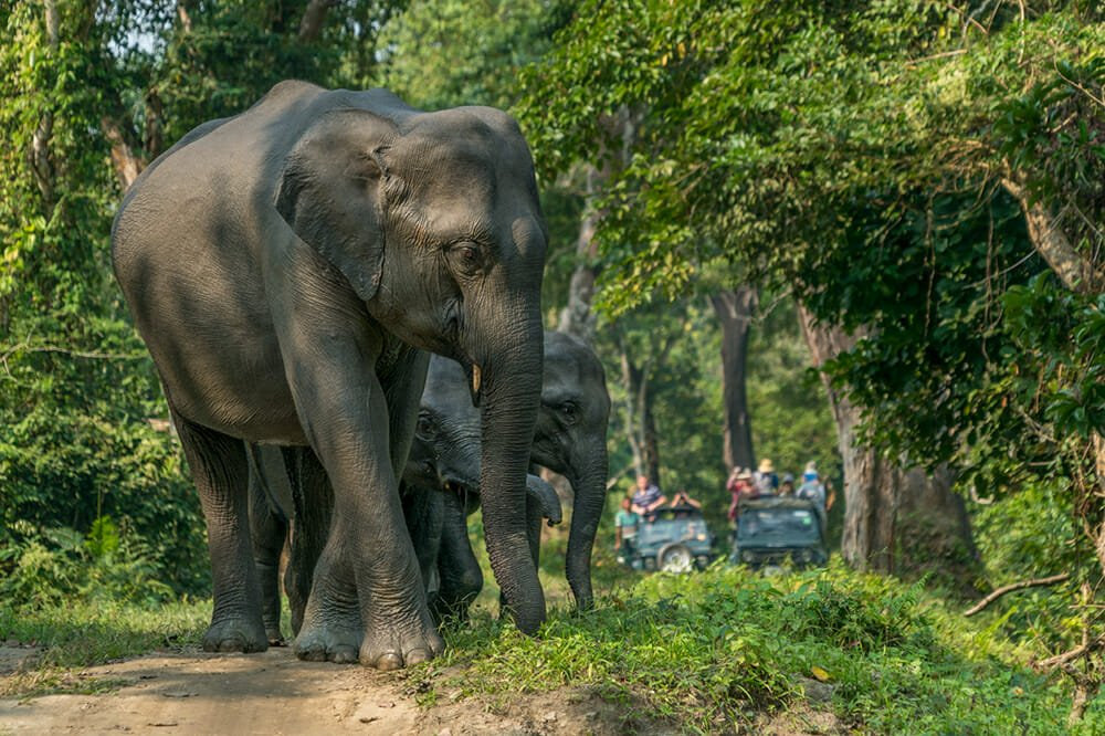 Safari holiday destinations - Kaziranga National Park