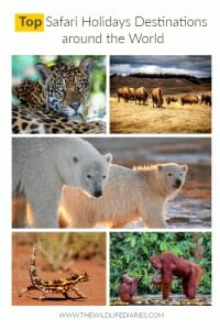 Top Safari Holidays Destinations Around the World. Use this guide to choose your ultimate wildlife adventure anywhere in the world. #wildlife #wildlifetravel #safari