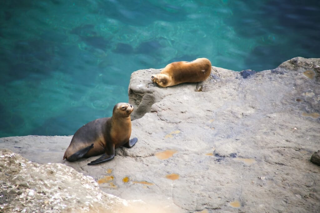 Sea lions on Peninsula Valdes