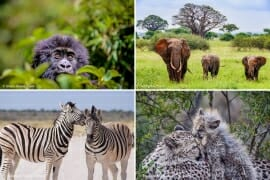 Top African Safari Holidays Destinations