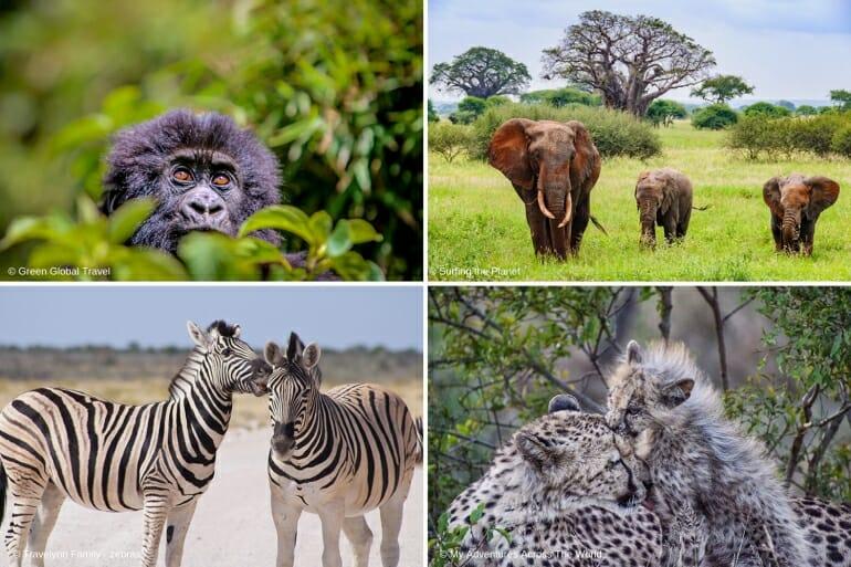 Top African Safari Holidays Destinations