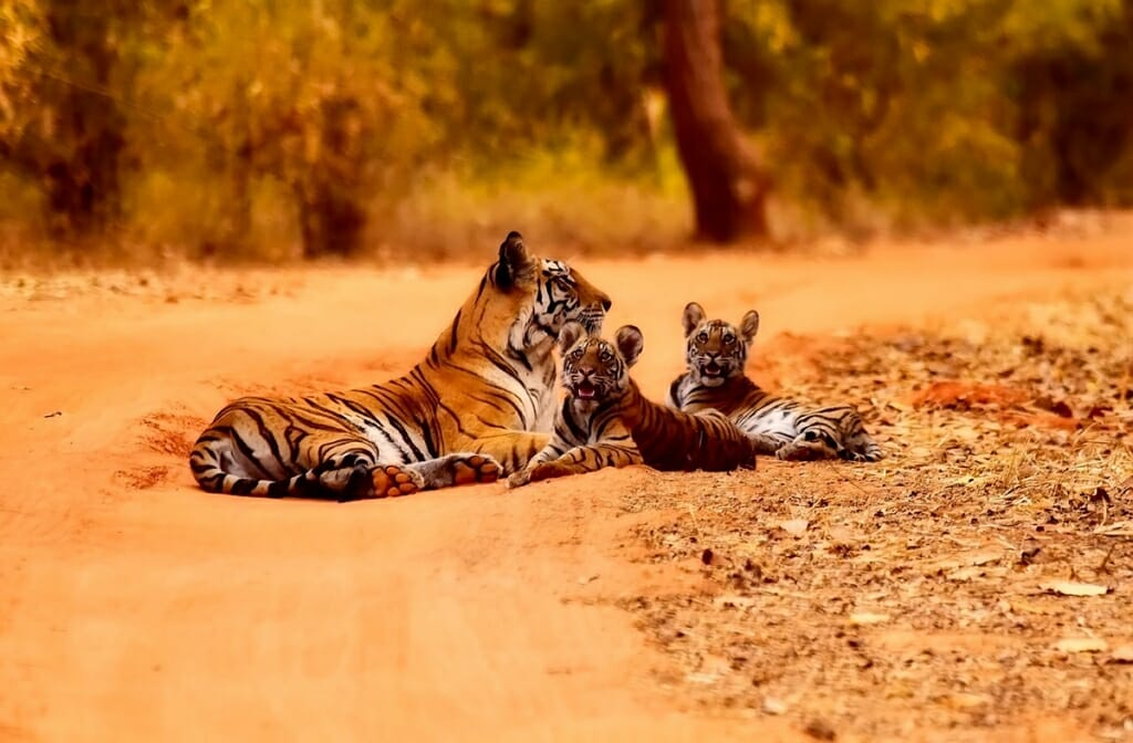 best safari holidays destinations in the world - Kanha National Park