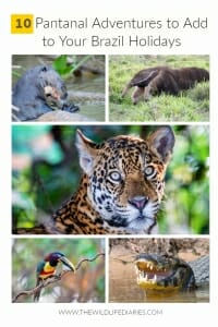 Top 10 Pantanal Adventures to Add to Your Brazil Holiday