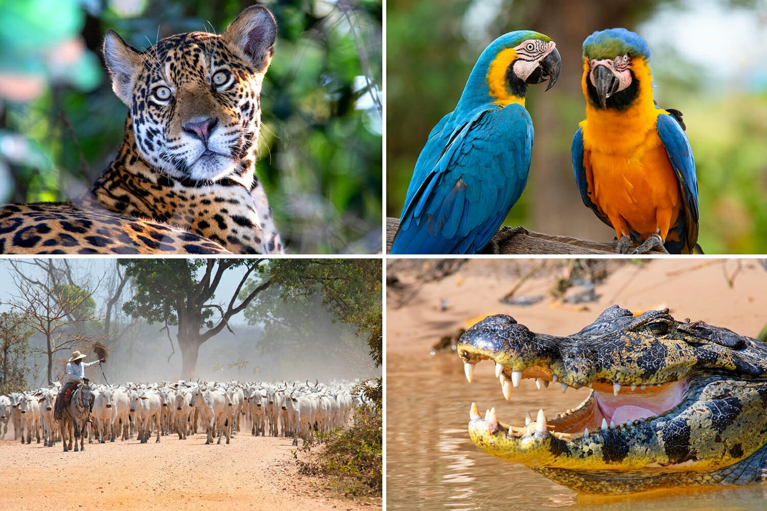 Top 10 Pantanal Adventures to Add to Your Brazil Holidays