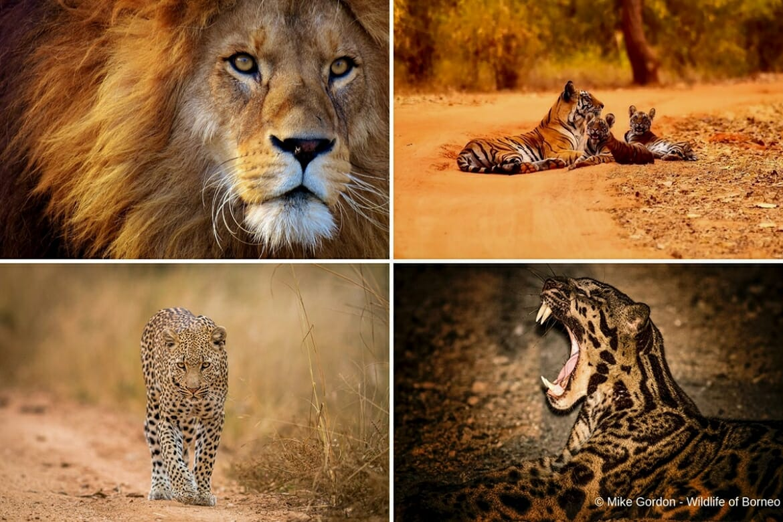 Seven types of big cats