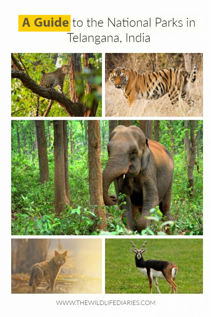 A Guide to the National Parks in Telangana, India
