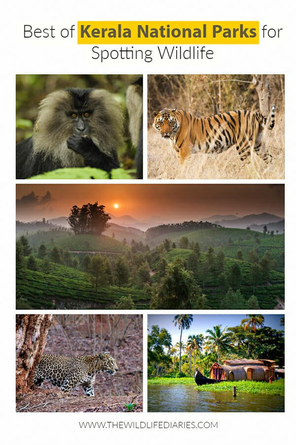 Best of Kerala National Parks for spotting wildlife