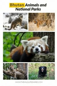 Bhutan Animals and the National Parks of Bhutan