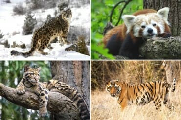 Bhutan animals