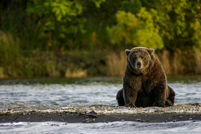 Bear watching in Katmai National Park, Alaska