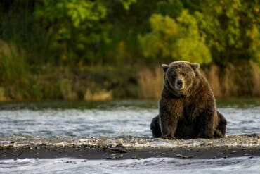 Bear watching in Katmai National Park, Alaska