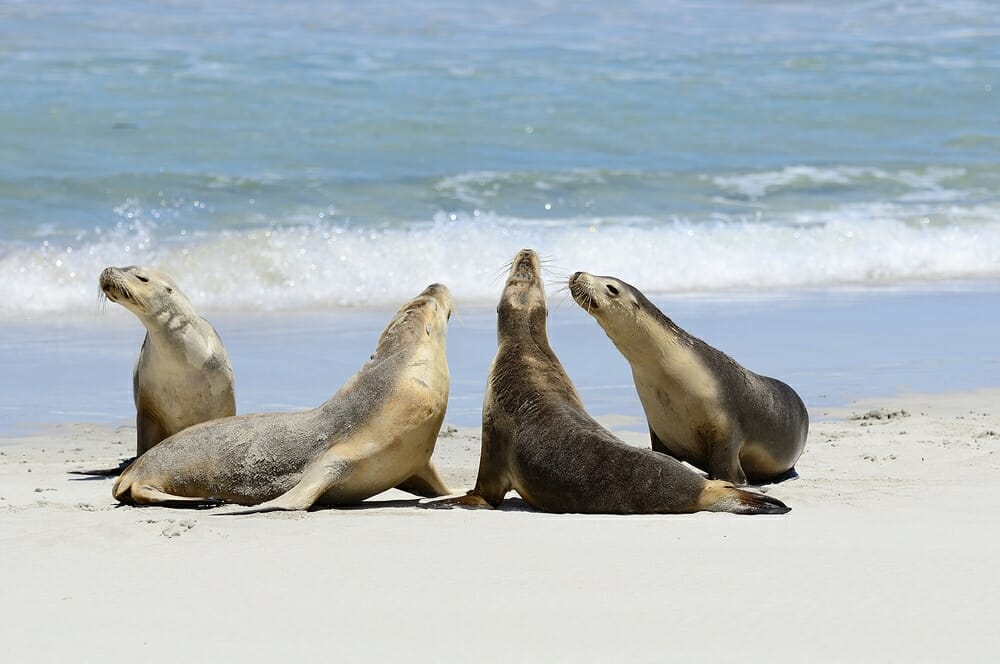 Best Wildlife Destinations in Australia - Kangaroo Island