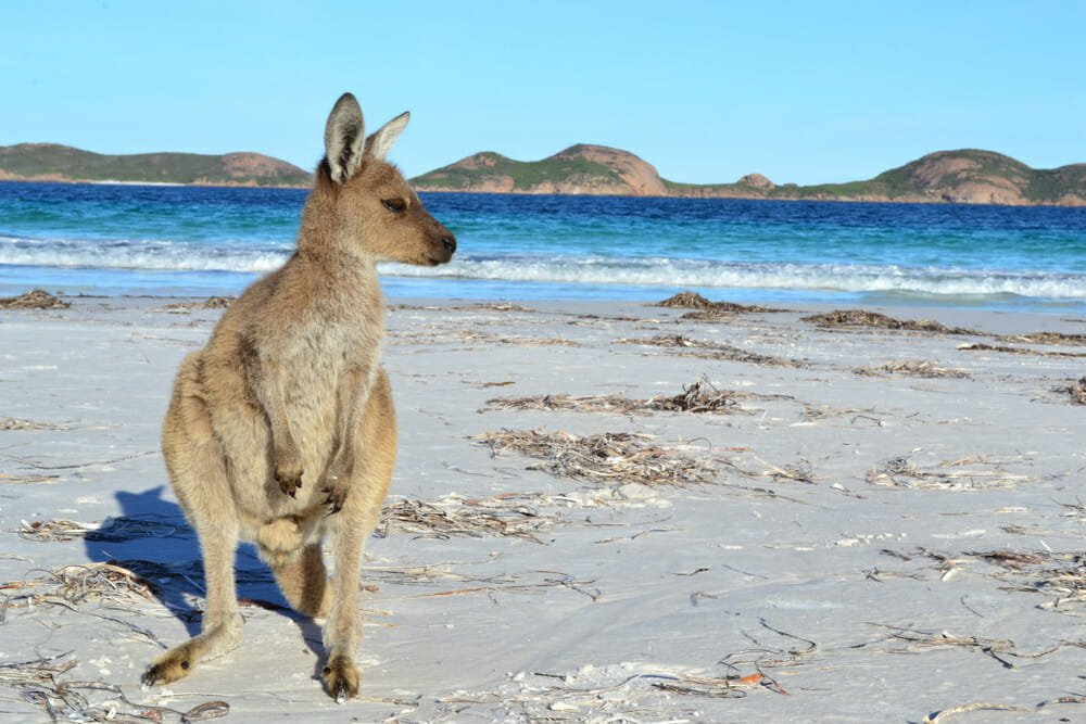 Top Wildlife Destinations in Australia - Eyre Peninsula