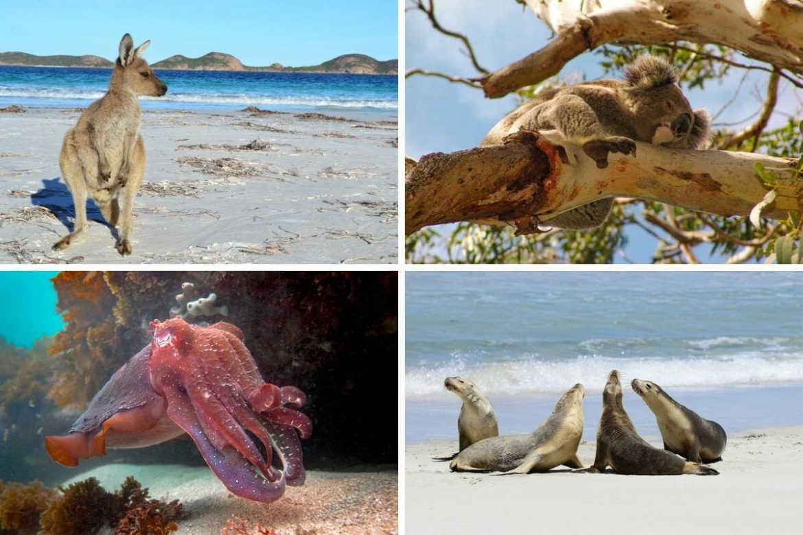 Top 10 Wildlife Destinations in Australia
