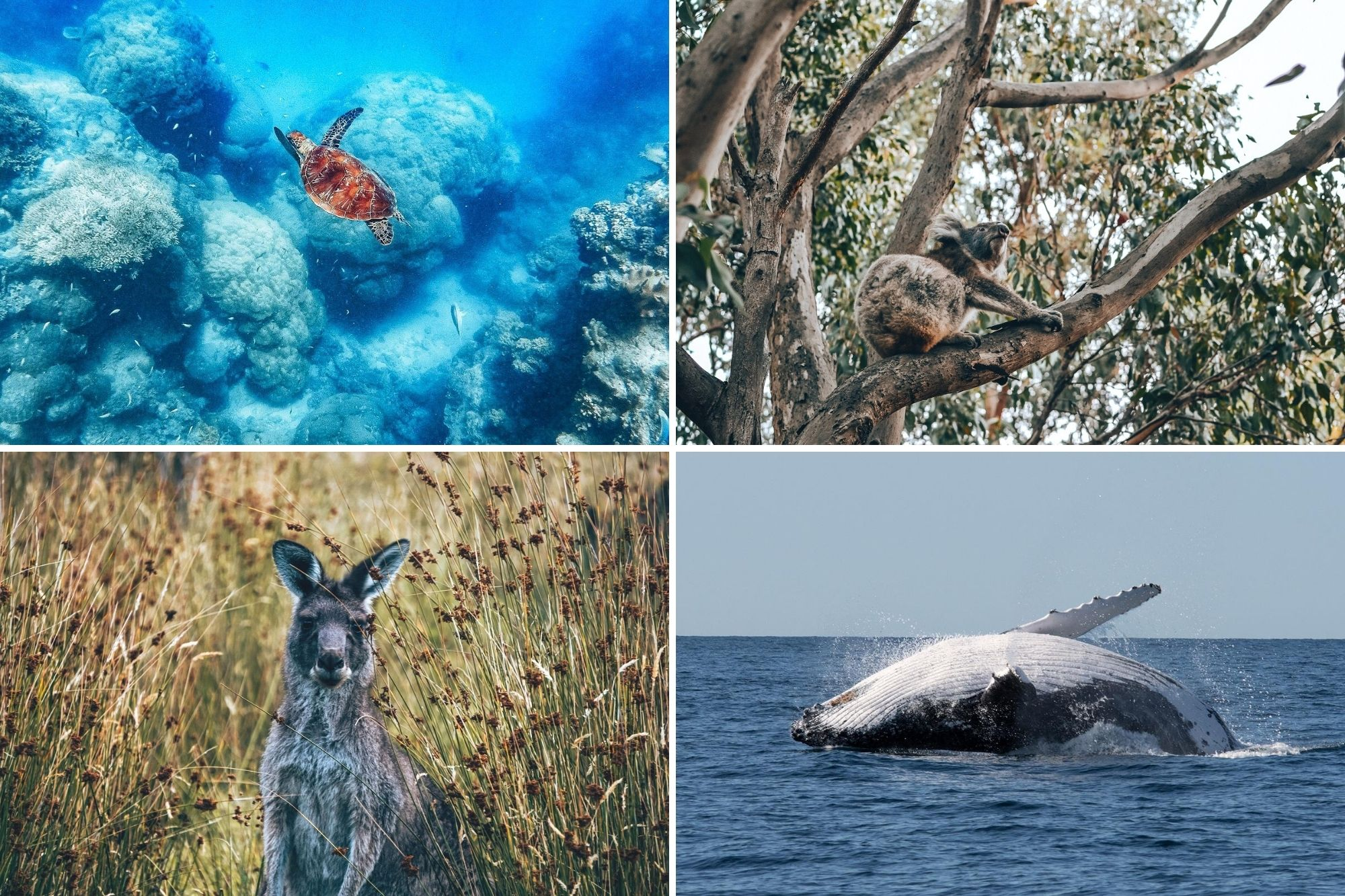 Best places to see wildlife in Queensland
