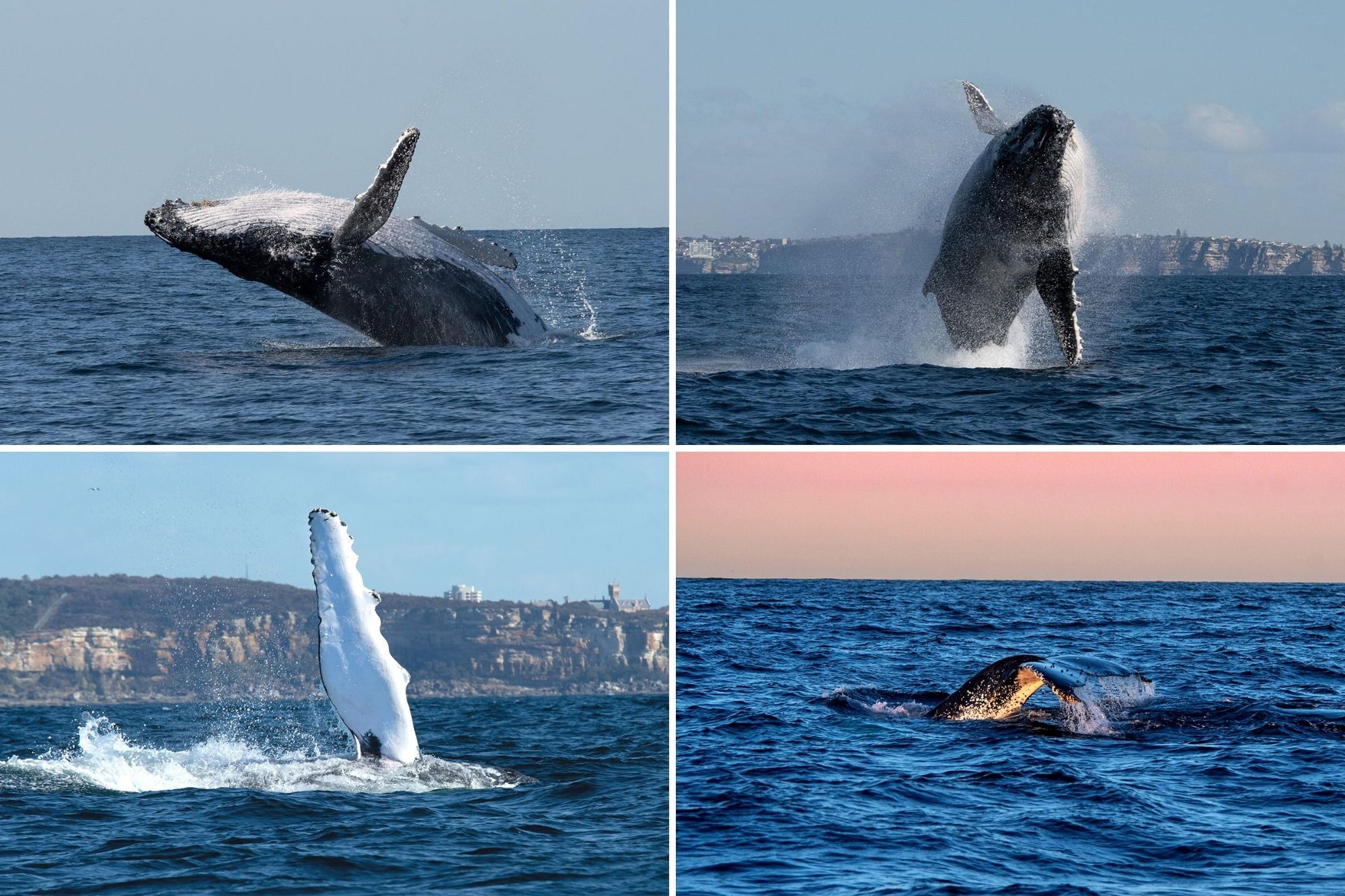 Whale Watching in Sydney – a local's guide to the epic wildlife spectacle