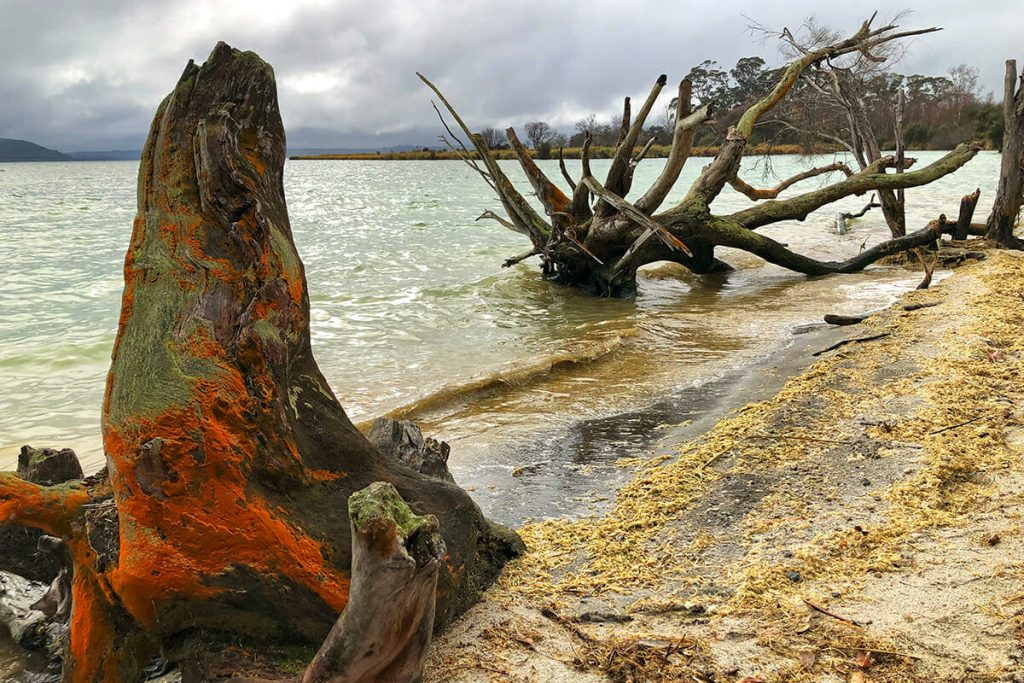 Acidic waters of Lake Rotorua