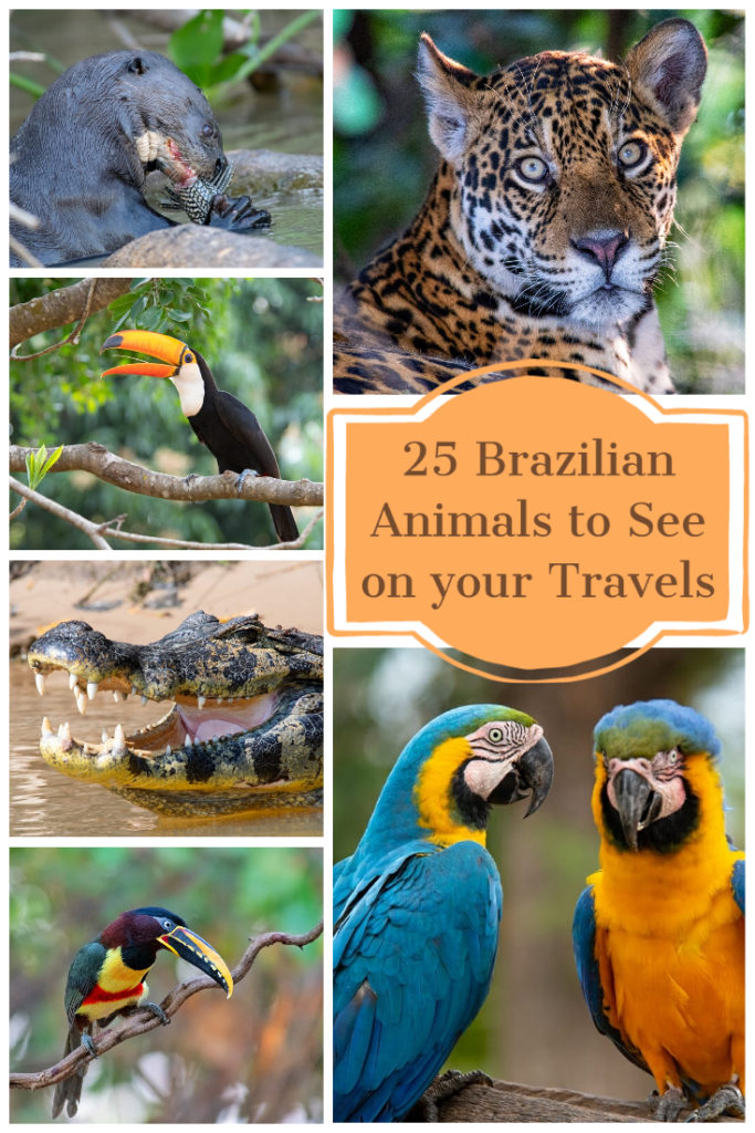 Brazilian animals to see on your travels