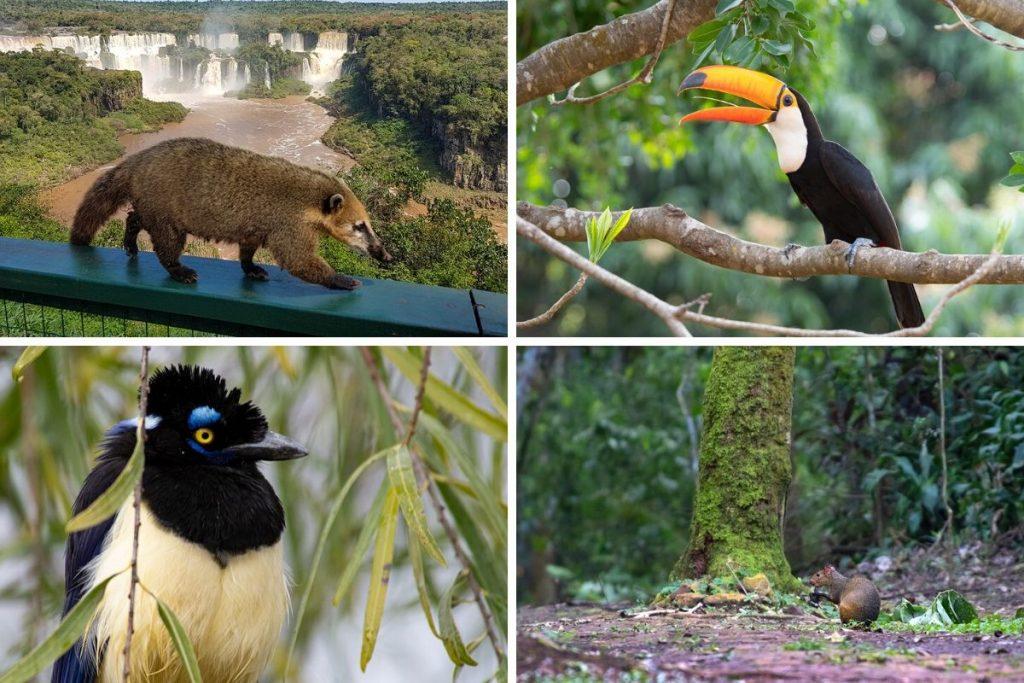 Wildlife of Iguazu Falls