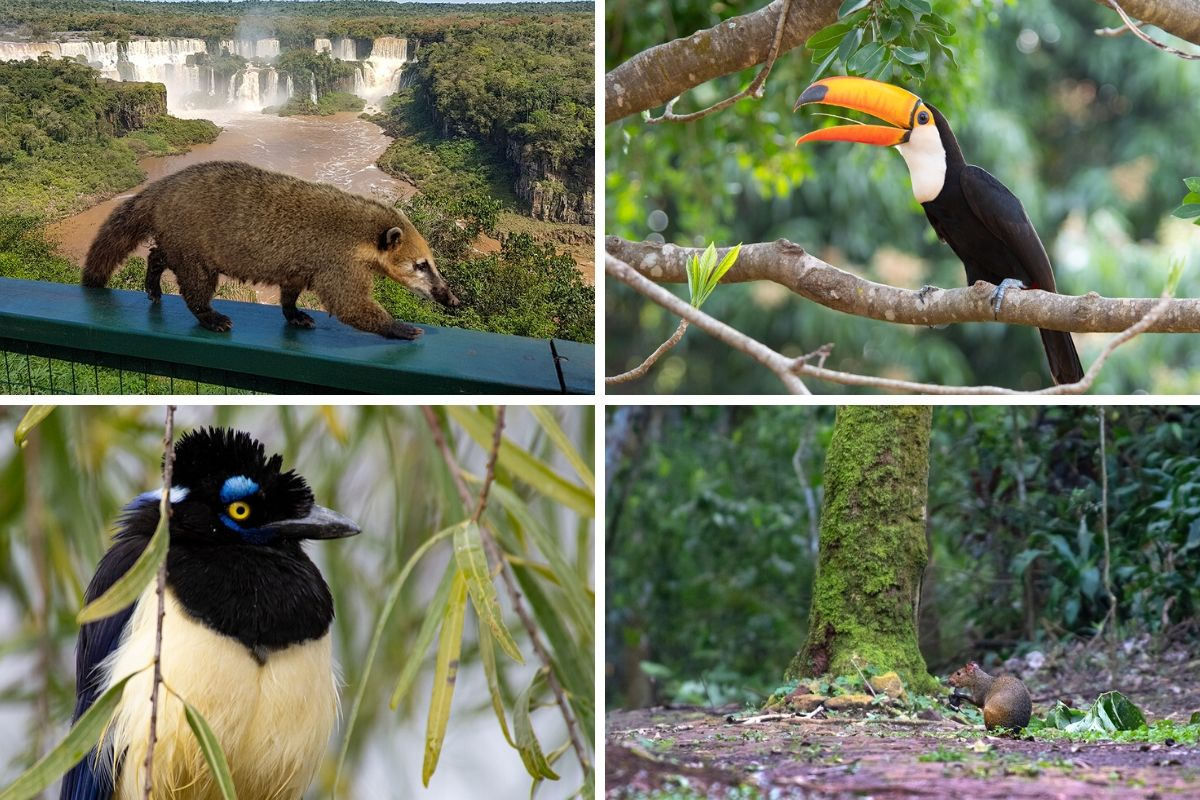 Wildlife of Iguazu Falls