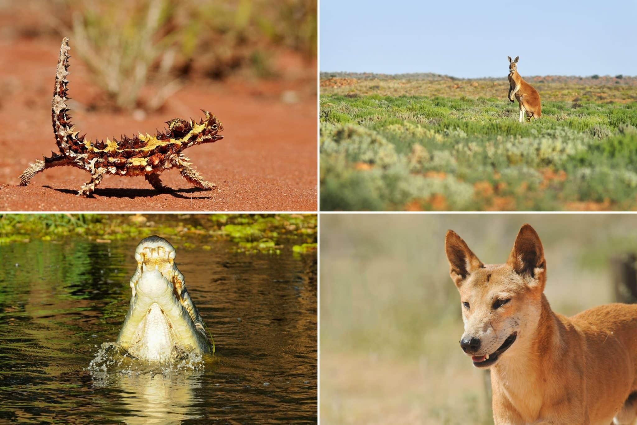 Adelaide to Darwin road trip to see Australian wildlife