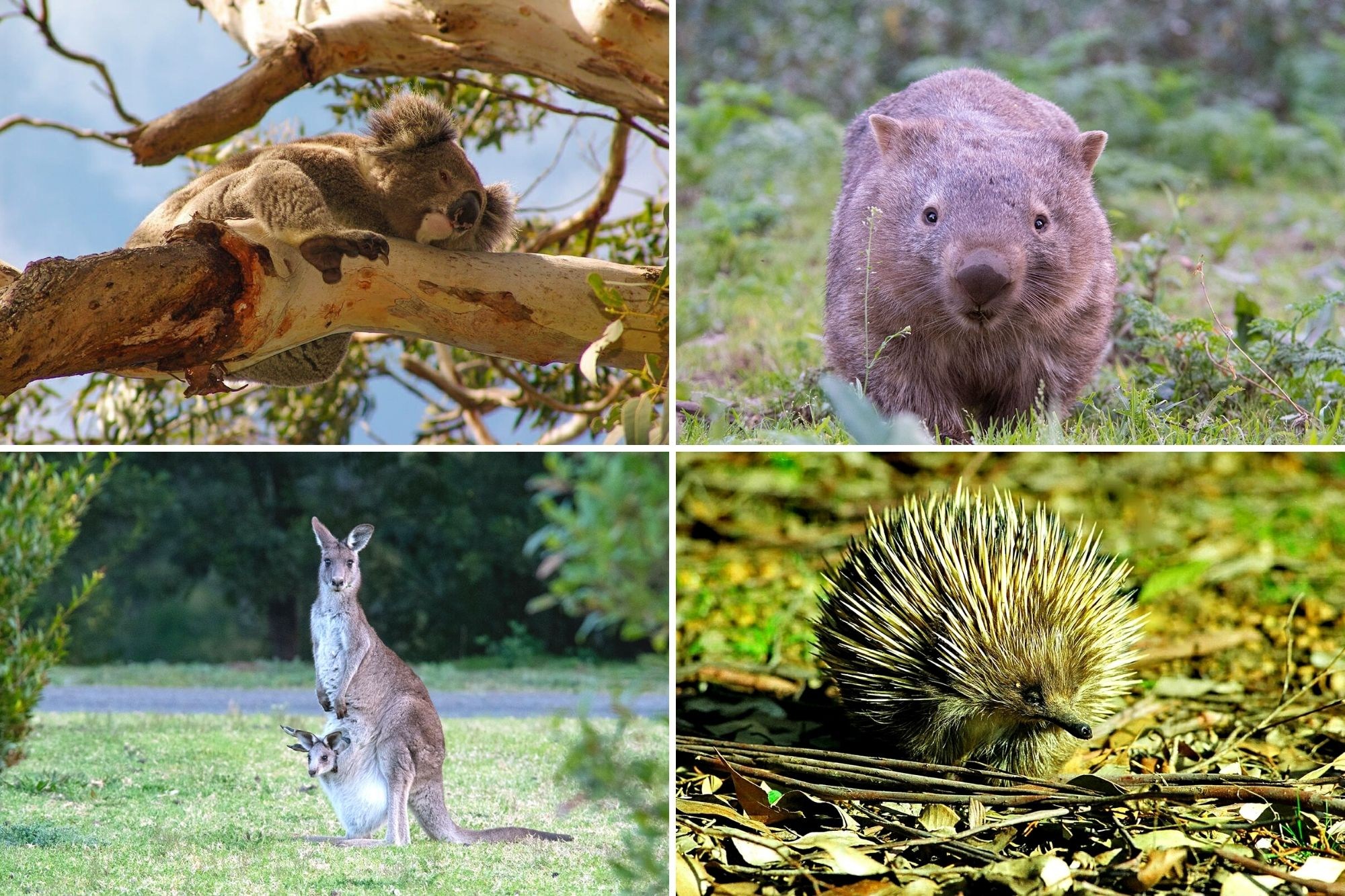 Where to see wildlife in Sydney