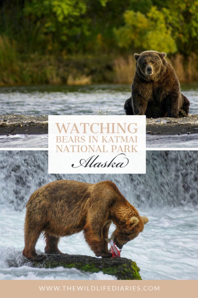 Watching Bears in Katmai National park