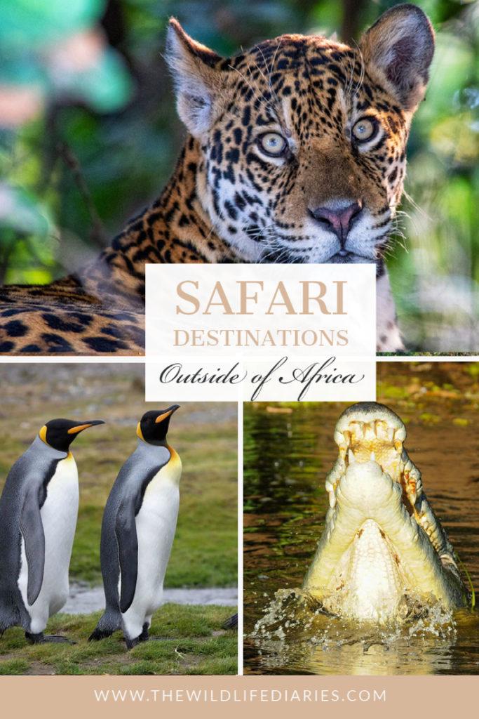Safari Holidays destinations outside of Africa
