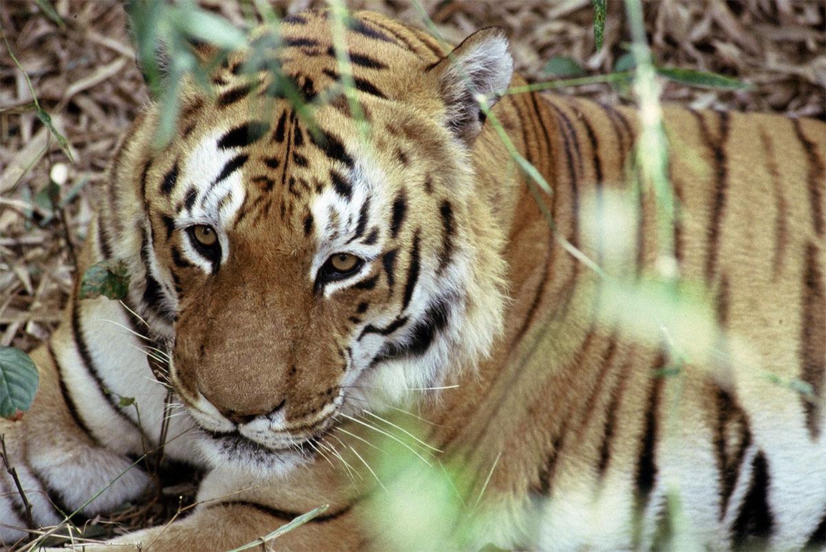 Kanha National Park Safari