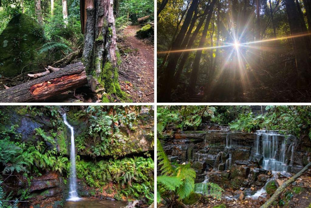 Hiking adventures in Sydney