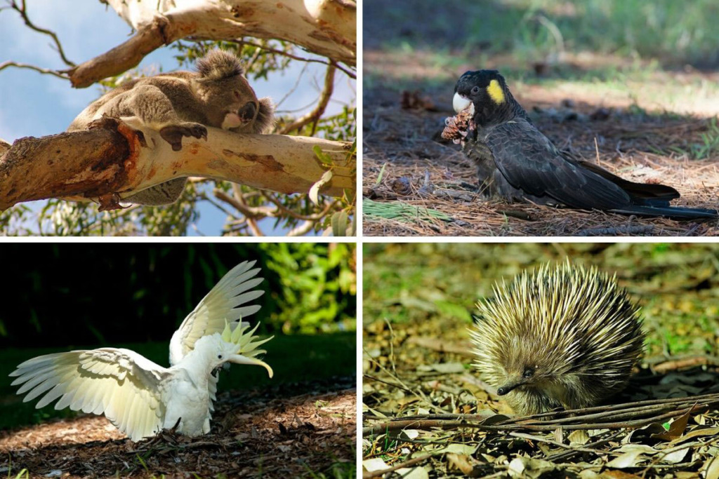 wildlife spotting adventures in Sydney